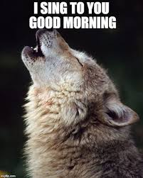 Angry Wolf Meme - deluxe encouraging meme funny and cute hehehe pinterest testing