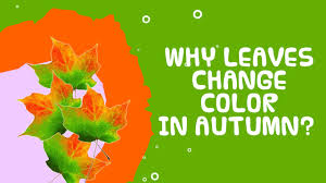 why do leaves change color in autumn fall facts about autumn