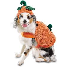 dog halloween costumes dog costumes u0026 wigs for halloween petco