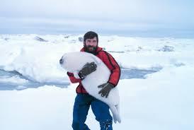 Seal Ribbon A Man Carrying A Ribbon Seal Pup Aww