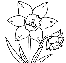 daffodil for colouring printable daffodil flower coloring page
