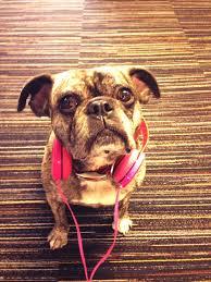 glass door employee reviews 10 of the best companies for dogs glassdoor blog