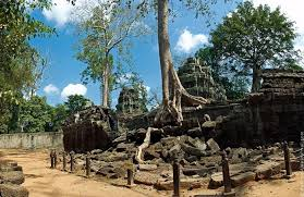 trees at the cambodian temple of ta prohm amusing planet