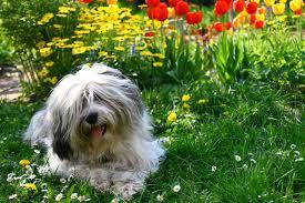 how to create a pet friendly garden friendly garden plants