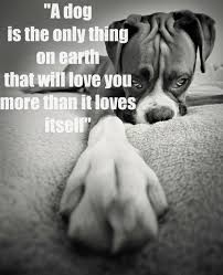 boxer dog sayings 309 best images about fur babies that are too cute on pinterest