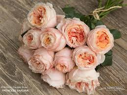 premium garden rose princess sakura