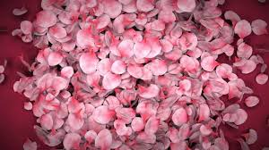 flower petals falling flower petals ae template