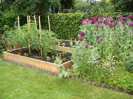 my garden failures or how do i revive my dying vegetable plants