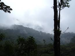 study abroad costa rica blog monteverde costa rica ciee