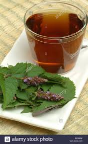agastache cuisine medicinal herbtea made of corean mint hyssop mint hyssop
