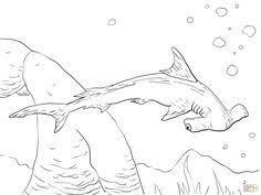 shark coloring pages printable shark shark week ocean