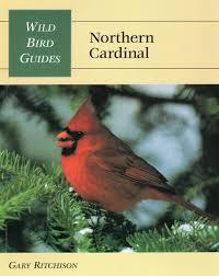 cardinal bird home decor wild bird guide northern cardinal wild bird guides gary