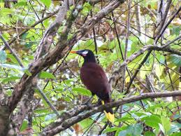 Canopy Birds by Eat Drink Travel Be Happy Red Frog Resort Bastimentos Panama