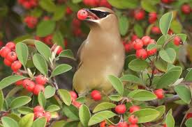 fruit bearing trees that attract birds