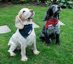 kilts and canine wedding fashion from dugz