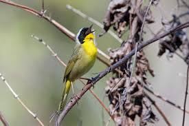 bird friendly communities forsyth audubon