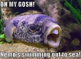 Fish In The Sea Meme - oh my gosh nemo sea memes comics pinterest humor funny