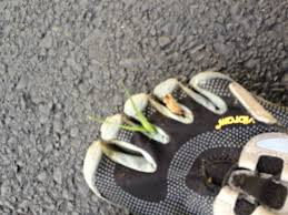 reddit top 2 5 million barefootrunning csv at master umbrae