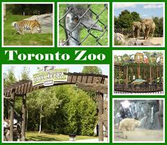 25 beautiful toronto zoo ideas on baby polar bears