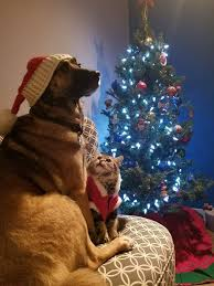 dog christmas 13 cheery christmas photos of cats and dogs mnn nature