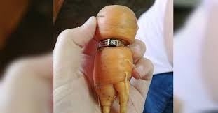 carrot ring woman finds missing engagement ring on carrot