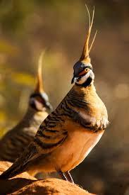 2959 best joy birds images on pinterest beautiful birds bird