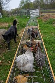 Backyard Farms Chicken Tunnels Suburban Growing