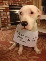 Dog Shaming Meme - funny dog shaming pictures
