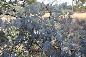 brisbane native plants movie locations u2013 the 2 bradshaws