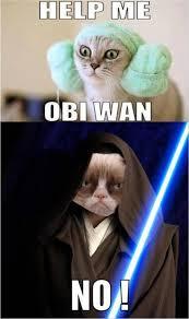 Cat Internet Meme - funny star wars cat memes funny pics story