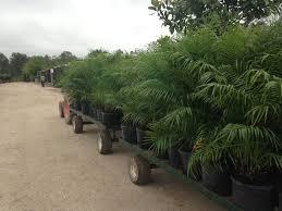 25 beautiful wholesale plants ideas on terrariums for