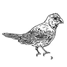 the sketch audubon