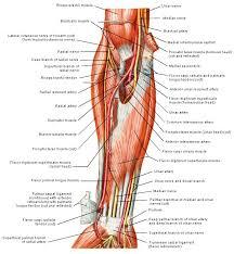 Foot Vascular Anatomy 94 Best Anatomy Images On Pinterest Anatomy Human Anatomy And