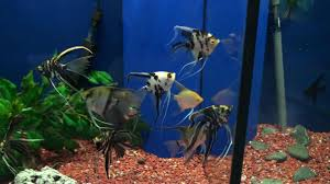 health benefits of tropical fish promoted in india tropical fish