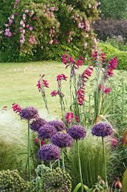 plante vivace soleil les 25 meilleures idées de la catégorie massif de fleurs sur