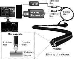 rapid fiber optic raman spectroscopy for real time in vivo