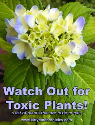 list of non toxic houseplants for cats