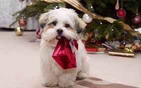 precise pet products the dish holiday gifts for your dog or cat