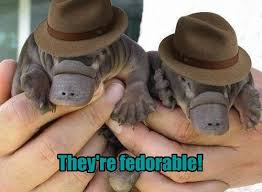 Platypus Meme - i can has cheezburger platypus funny animals online cheezburger