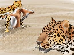 jaguar 3 ways to tell a jaguar from a leopard wikihow