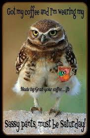 Funny Saturday Memes - 541 best sassy saturdays images on pinterest happy saturday