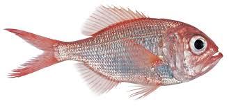 a picture of fish wallpaper download cucumberpress com