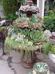 1248 best endless succulent ideas images on pinterest plants