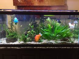aquarium design exle easy low light plants for a low tech 60 gallon page 2 268069