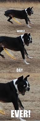 Bad Dog Meme - bad luck dog viral viral videos