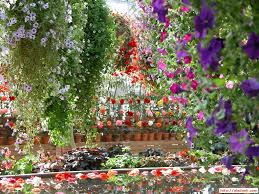 Photos Flowers Gardens by Garden Flowers Wallpaper Decorating Clear