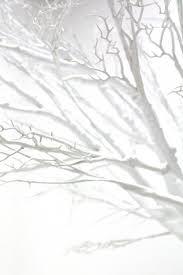 white tree jumbo white tree scenery theming hire event prop hire