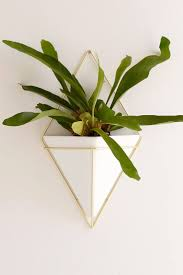 Wall Planters Indoor by 22 Best Indoor Gardening Images On Pinterest Indoor Plants