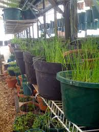why is an aquaponic system better than a hydroponic one