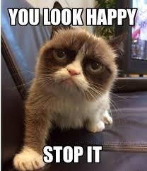 Memes Of Grumpy Cat - grumpy cat meme grumpy cat pictures
